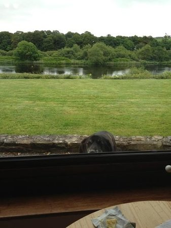 Riverside House: Toby and the view.