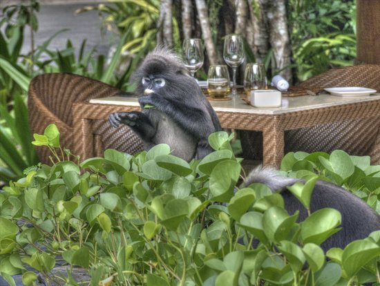 The Datai Langkawi: Is my table ready yet?