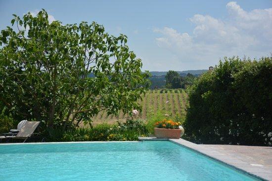 Tenuta di Corsano: piscine vue sur les vignes