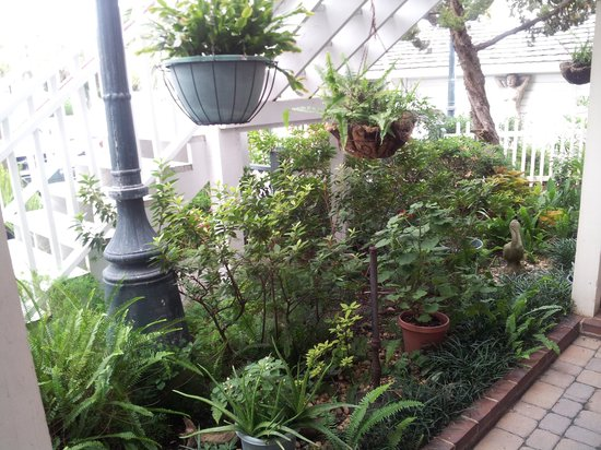 Driftwood Inn: Just a few of the plants