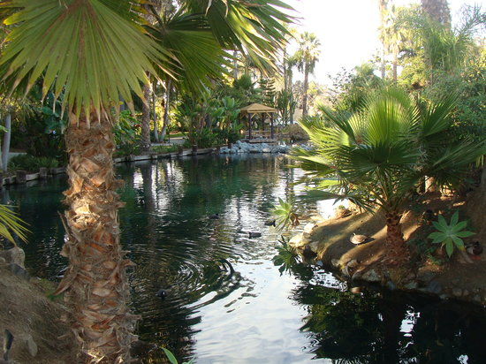 Paradise Point Resort & Spa: beautiful grounds