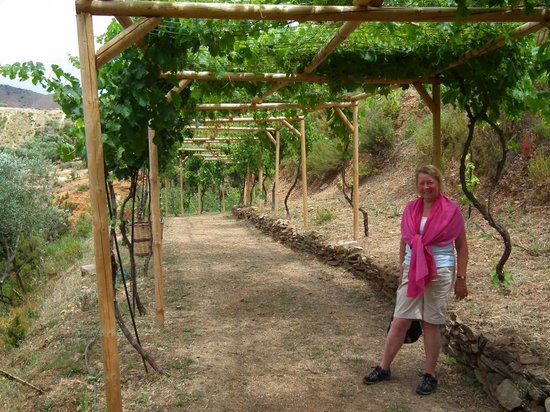 Botanical Park & Gardens Of Crete: Pergola of grape vines - Pergola Of Grape Vines - Picture Of Botanical Park & Gardens Of