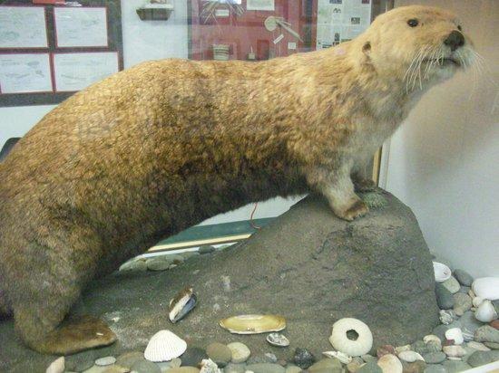 Coastal Interpretive Center: A sea otter