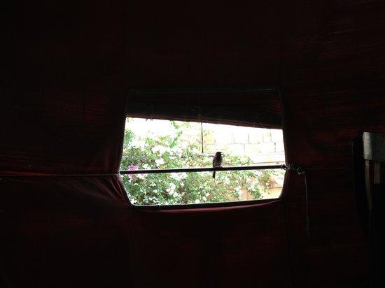 Saffron: Window