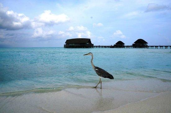 COMO Cocoa Island: Villas from the island