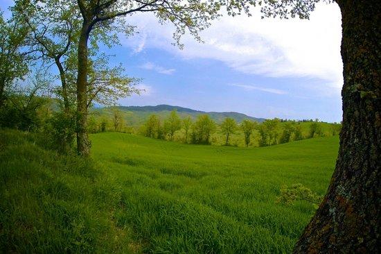 Agriturismo Montelovesco: L'azienda agricola