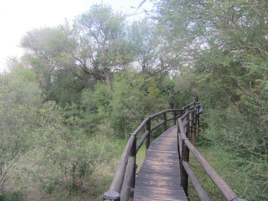 Hamiltons Tented Safari Camp: walkway to rooms