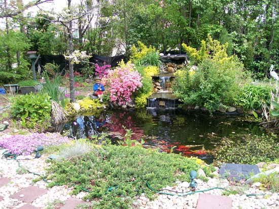 Twin Magnolias Bed and Breakfast: Koi pond & waterfall in backyard