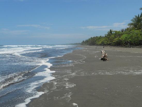 Las Nubes Natural Energy Resort: playa matapalo