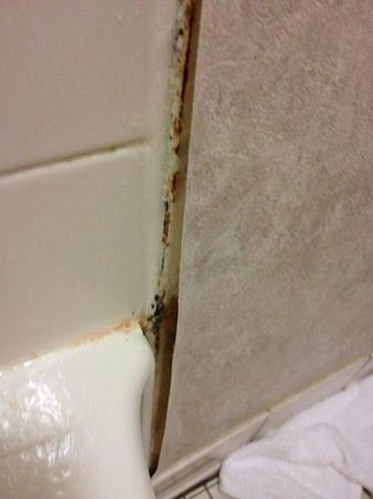 Days Inn Grand Haven: peeling wallpaper and mold in bathroom - room 164