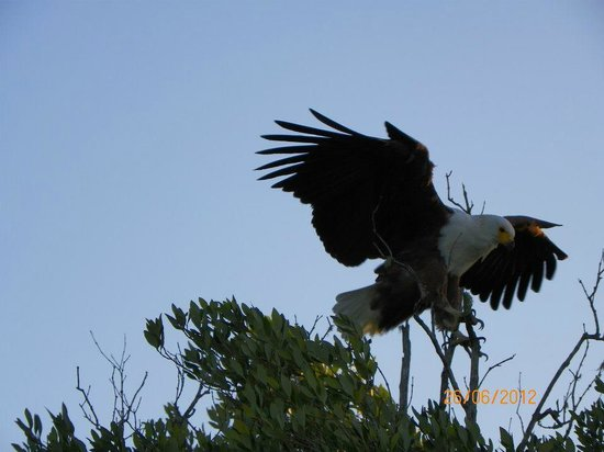 Sunset Lodge: Fish Eagle