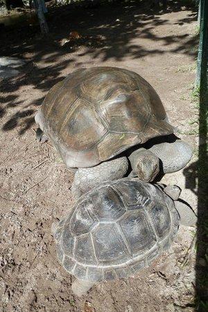 Constance Ephelia: Riesenschildkröten auf dem Gelände