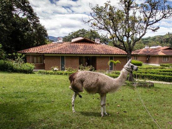 Hosteria de Vilcabamba: En el jardín