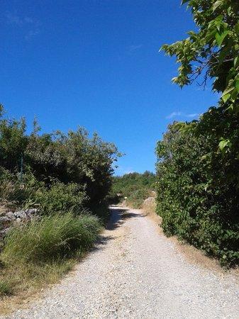 Le Mas Saint-Joseph : le petit chemin qui mène dans les bois juste en sortant de notre chambre