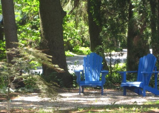AquaBella B&B: Blue chairs under the spruce...
