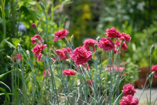 Rose Cottage Bed & Breakfast : Rose Cottage, garden
