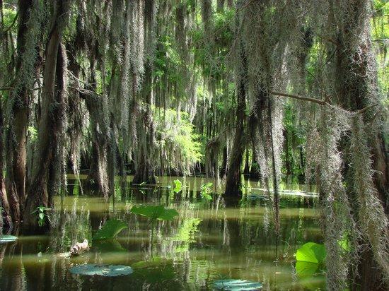 Bayou Teche Experience: Lake Martin