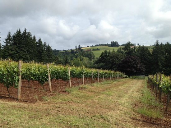 Red Ridge Farms: grape vines
