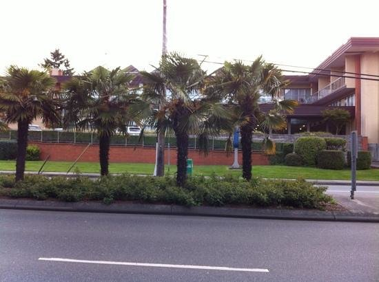 Coast Tsawwassen Inn: palm trees in Canada