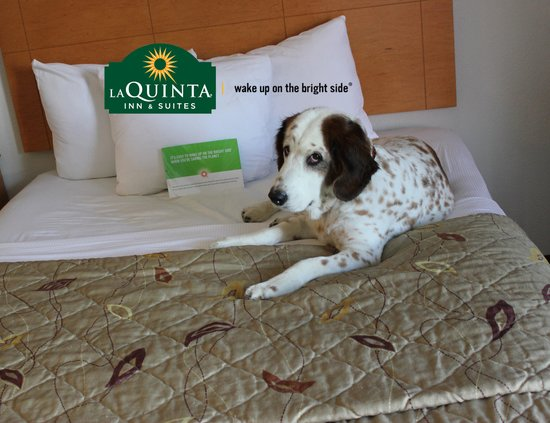 La Quinta Inn & Suites Norfolk Airport: I like it here !
