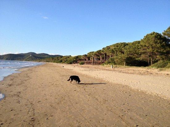 Camping Baia Verde: Panorama della spiaggia
