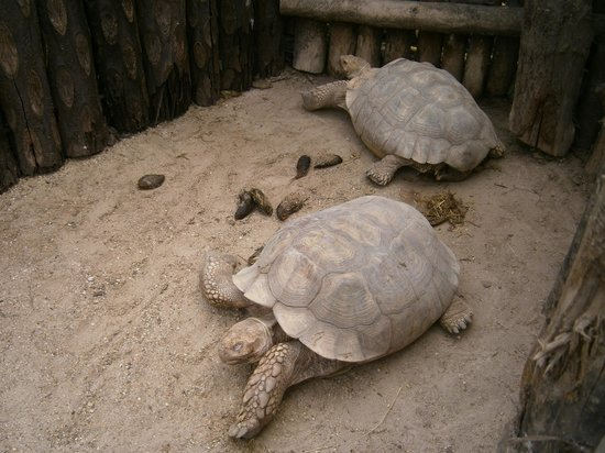 Biotropica la Serre Zoologique: LES TORTUES DORMEUSES