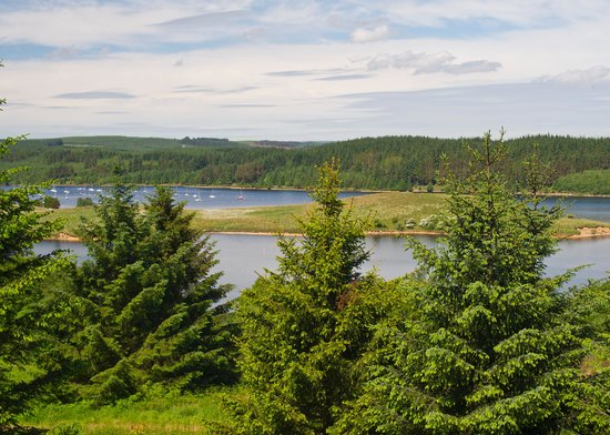 Elishaw Farm Holiday Cottages: Kielder