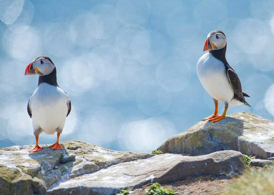 Elishaw Farm Holiday Cottages: Farne Island Puffins