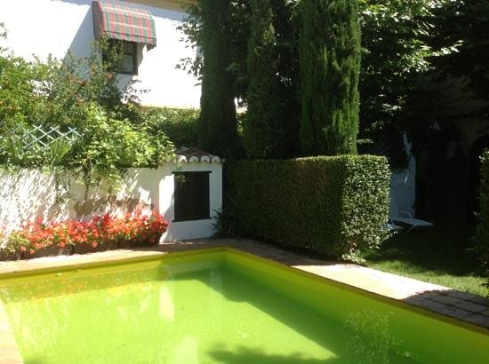 Antigua Casa de la Bodega: Pool with adjoining lawn for sunbathing.