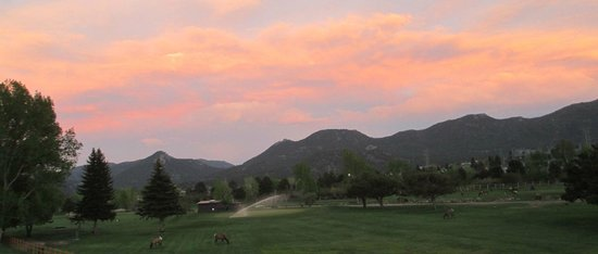 Discovery Lodge: Evening shot of Elk on Golfcourse