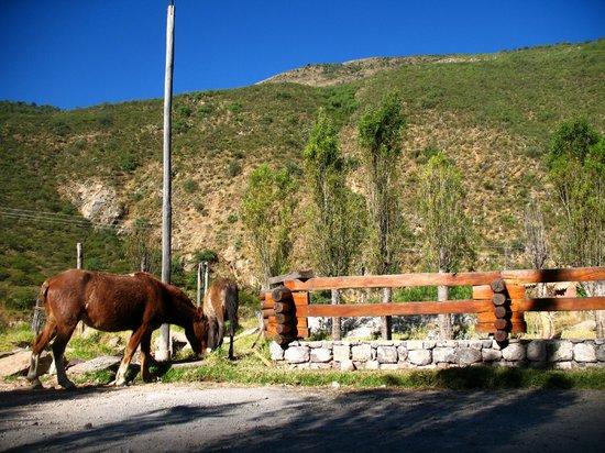 Hotel & Restaurante Tampumayu: caballos