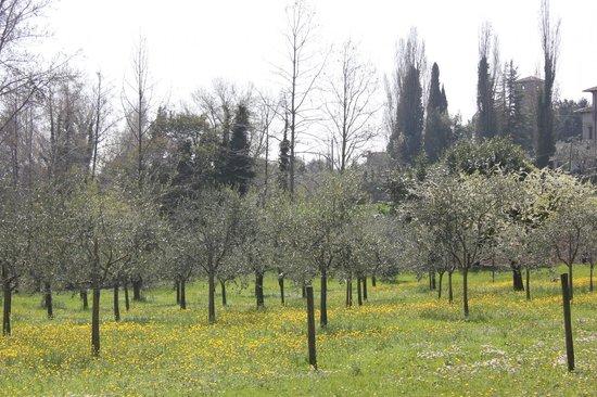 La Villa del Lago: veduta del parco in primavera