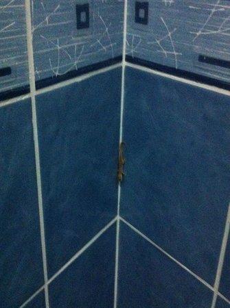 Sandy Beach Hotel & Resort: Lizard in the bathroom