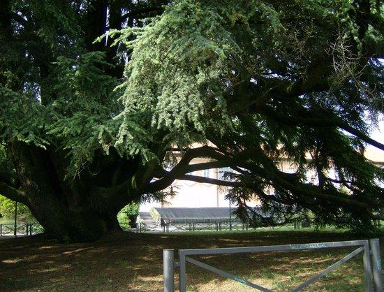Hotel di Varese: giardino municipalo dans varese