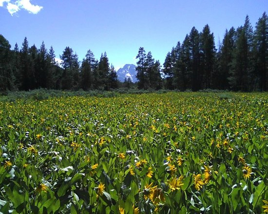 Grizzly Country Wildlife Adventures : Wild flowers in bloom