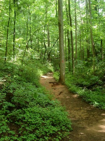 Table Rock State Park: Easiest part of Table Rock trail