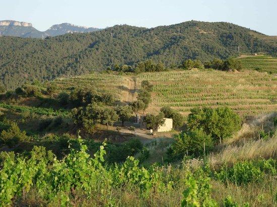Hotel Cal Llop: hiking trails through vineyards around Gratallops