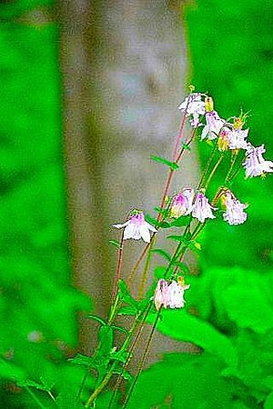 Gordon's Park: Woodland flowers on the trail