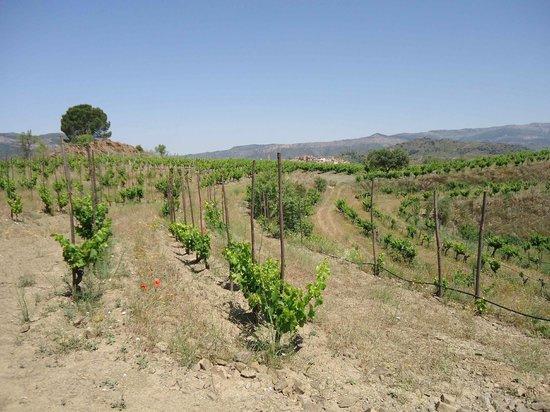 Cal Llop: Vineyards in Gratallops