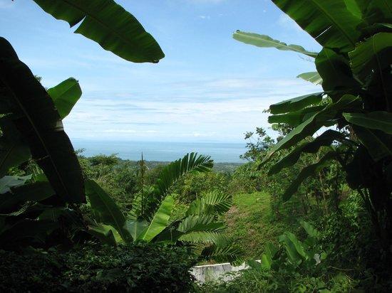 Oxygen Jungle Villas: View from Villa