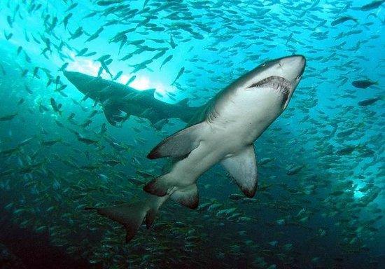 Let's Go Adventures : Grey Nurse Sharks @ Broughton Island