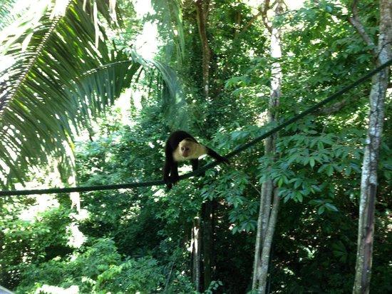 Jungle Villa: visitor