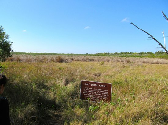 Collier Seminole State Park: looking out over the salt marsh