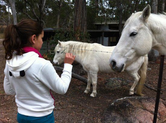 Diamondvale Cottages: White horses and one happy girl