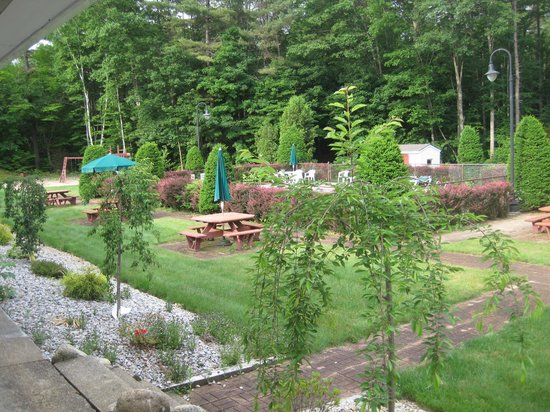 Golden Apple Inn: Back yard 3
