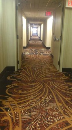 Hampton Inn Cincinnati - Kings Island: outdated carpet!