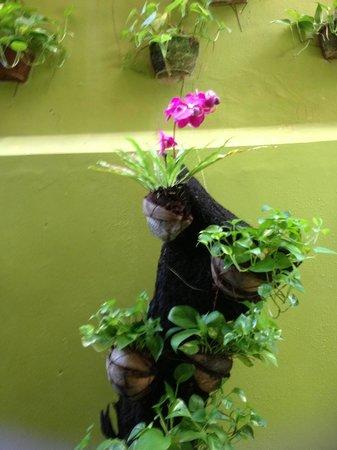 Febri's Spa : Plants on wall at Febri's