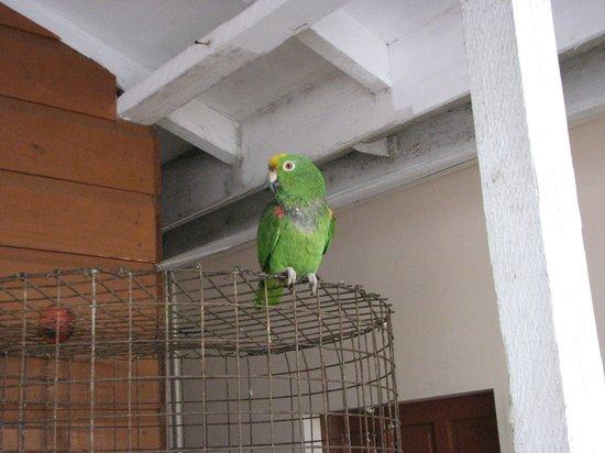 VIP Holiday Resort: Friendly Parrot