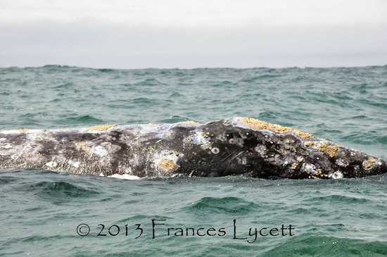 Whale Research EcoExcursions 사진
