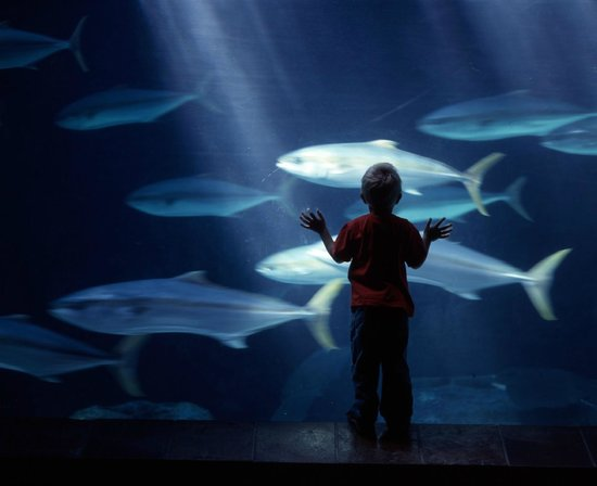 Cape Town Merkez, Güney Afrika: Young and old are sure to enjoy the Aquarium